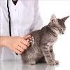 Ветеринарные клиники в Вахтане
